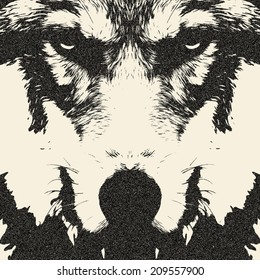 Eye contact with severe wolf. Menacing expression and awful charm of the wolf, beautiful animal and dangerous beast. Amazing illustration in retro style. Great for user pic, icon, label or tattoo.