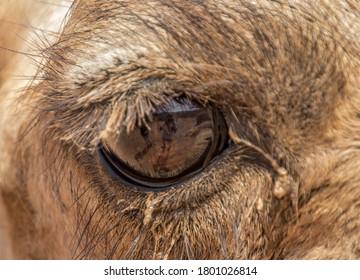 Eye of the desert. Photographer in the Camel´s eye.