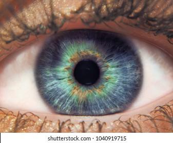 Eye female macro