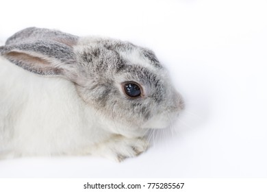 (Eye focus)Rabbit on white background, Rabbit looking at the camera is shooting.