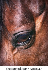 eye of the horse close-up