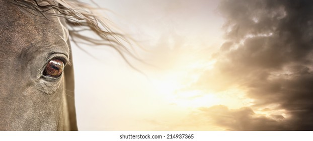 Eye of  horse with mane on cloudy sky , banner background