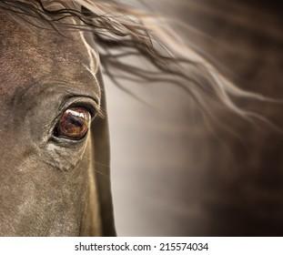 Eye of horse with mane on dark background