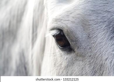 Eye of a horse, Netherlands