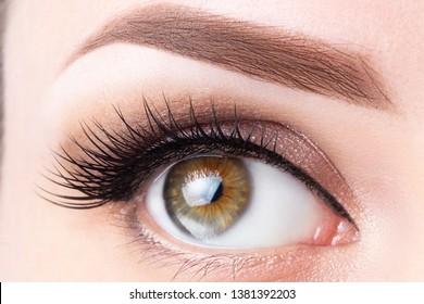 Eye with long eyelashes and light brown eyebrow close-up. Eyelashes lamination, microblading, tattoo, permanent, cosmetology, ophthalmology concept.