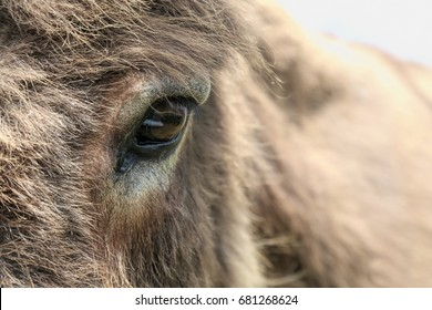 The eye is the portal to the soul of a donkey