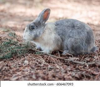 Eye of the rabbit. A rubbit in his original habitat.