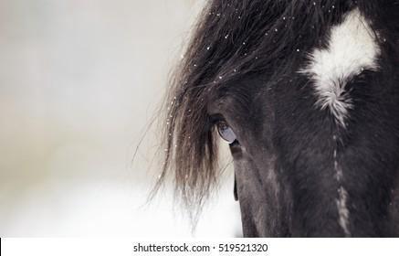 Eye of a sporting black horse closeup.