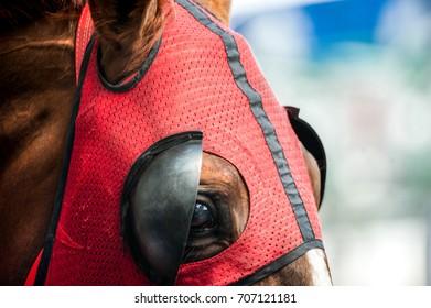 eye of throrughbred horse in mask closeup