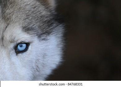 Eye of Wolf