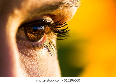 Eye of a woman observing the sunset in a sunflower field