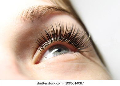 Eyelash Care Treatment Procedures, Staining, Curling, Laminating and Extension for Lashes. Beauty Model with Long Eyelashes. Skincare, Spa and Wellness. Close up.