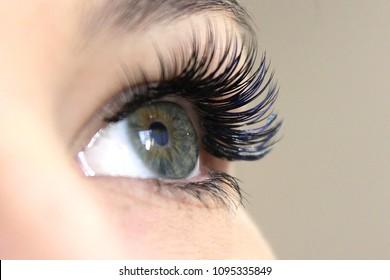 Eyelash Extension Procedure. Woman Eye with Long false Eyelashes. Close up macro shot of fashion eyes visagein in beauty salon.