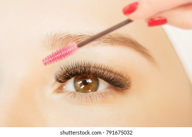 Eyelash Extension Procedure.Close up view of beautiful brown Woman Eye with Long Eyelashes. Stylist holding brush and making lengthening lashes for girl in a beauty salon.