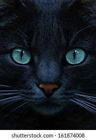 eyes of blue cat