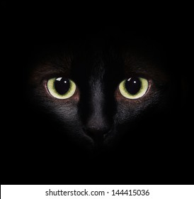 Eyes of the cat in the darkness