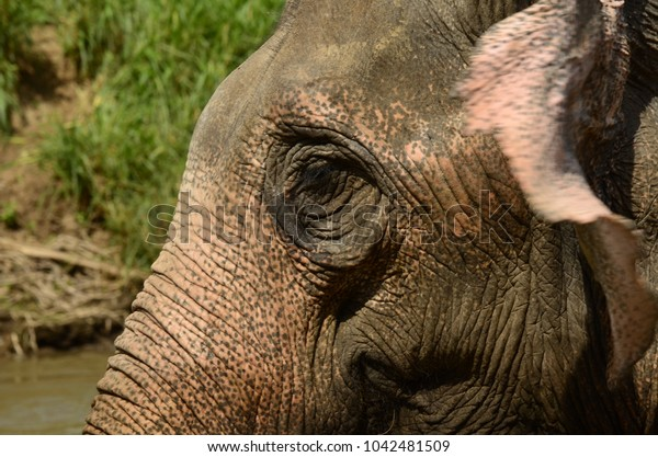 The eyes of elephant can communicate the feeling.