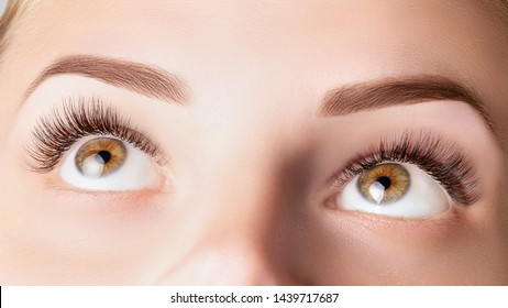 Eyes with long eyelashes. Classic 1D, 2D eyelash extensions and light brown eyebrow close up. Eyelash extensions, lamination, biowave, microblading concept.