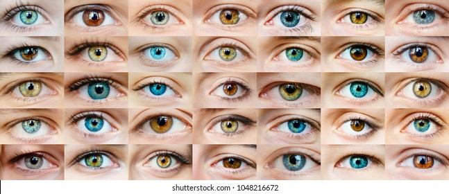 Eyes are many - Shutterstock ID 1048216672
