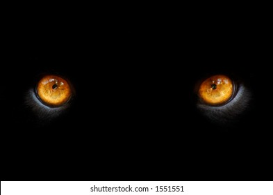 eyes of a panther in the dark