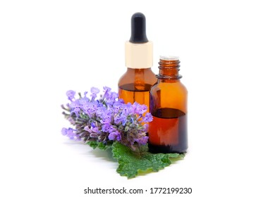 Faassen catnip (Nepeta faassenii) essential oil and extract in a bottles with leaf and flowers of plant. Isolated on a white background