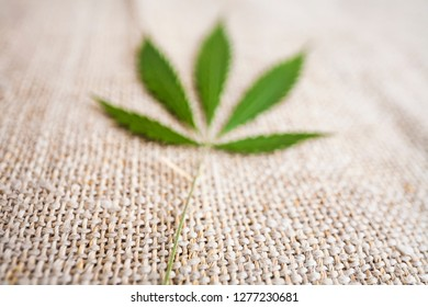 Fabric made from hemp. Cannabis fiber. Marijuana plant leaves