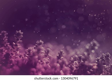 fabulous abstract purple background shot of moss plant closeup with drops and bokeh toned photo. Beautiful unusual natural wallpaper for design with copy space. Concept art. Minimal surrealism