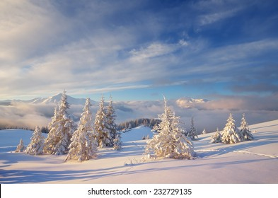 Fabulous Christmas landscape. Fir trees under the snow. Beautiful winter mountains