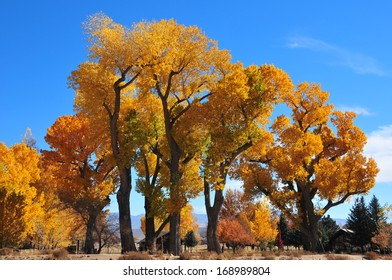 Fabulous display of Fall colors, Nevada