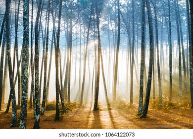 Fabulous european forest.  Picturesque sunrise in Portugal. Fairy tale scenic view.  Magnificent sun rays in pine trees.  Beautiful  nature landscape. Vivid colors. Sun light in wild territory