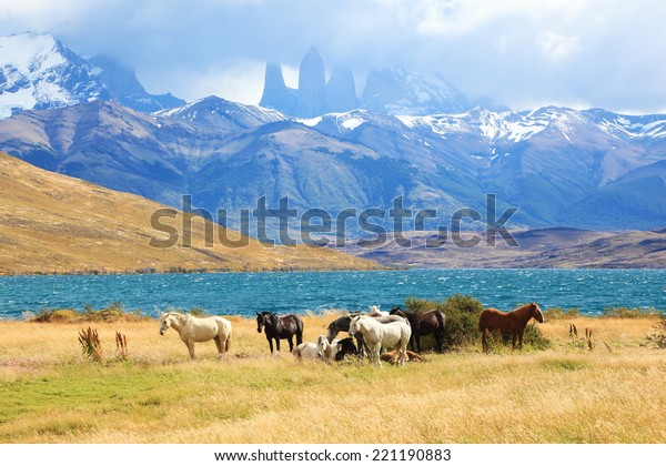 Fabulous lake in the mountains. Ashore are grazed herd of horses of different colors. South American Andes. Park Torres del Paine in Chile