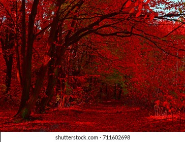 Fabulous Red Autumn Forest