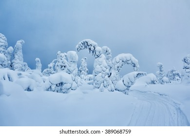 Fabulous snow-covered forest on a background of blue sky. Winter landscape.