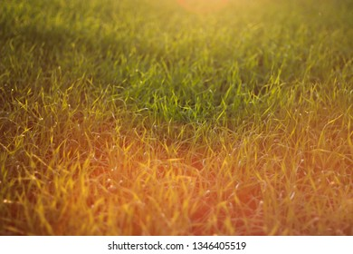 Fabulous sunset on the meadow. Chromatic aberration as a flare of color. Close up with green grass and flaming color tones.