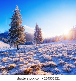 fabulous winter landscape