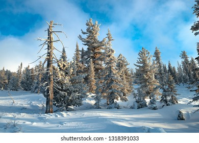 Fabulous winter taiga. Enigmatic winter forest keeps mysterious silence.