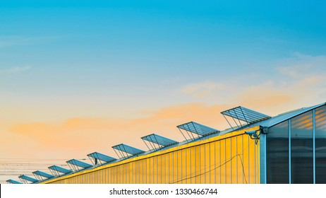 Facade of Glass Greenhouse with Open Windows for Ventilation on the Roof. Large Industrial Greenhouse at Sunset.