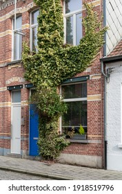 Facade of a house with climber plants, ivy growing on the wall. Ecology and green living in city, urban environment concept. Belgium, Europe.