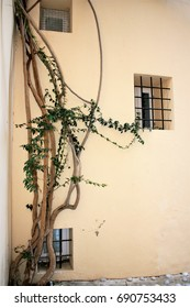 Facade of house of Ibiza, spain with window with bars and plant,