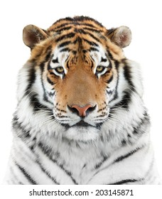Face of beautiful tiger