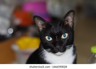 Boring Cat Images, Stock Photos & Vectors | Shutterstock