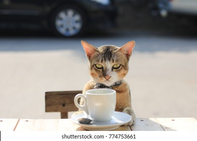 The face of a cat drinking coffee waiting for someone.