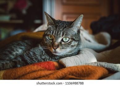 Face cat portrait at home