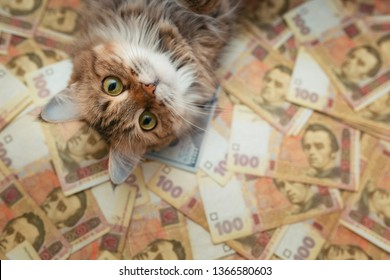 The face of the cat that lies on the Ukrainian banknotes. The cat lies on the hryvnia