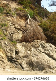 Face in the Cliff side at Beach