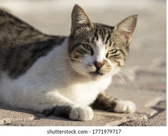 Face of cute cat with innocent looks.