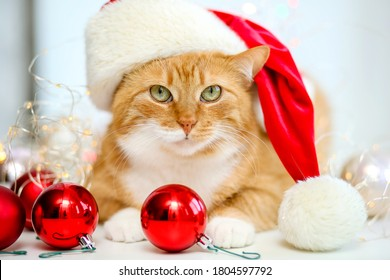 The face of a cute red cat in a red Santa Claus cap looks at the camera on a white background with lights.Christmas animal in balloons. Happy new year 2021! Merry Christmas.Funny pet.Happy holiday