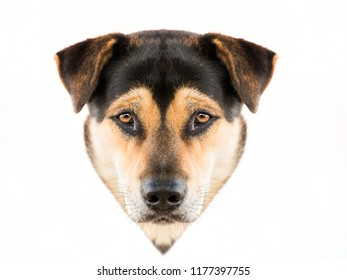face of a dog  isolated on white background.