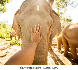 Face to face with giant elephant, Chiang Mai Thailand