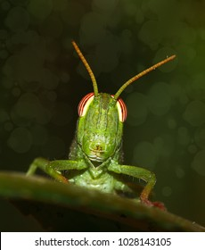 the face of a Grasshopper macro